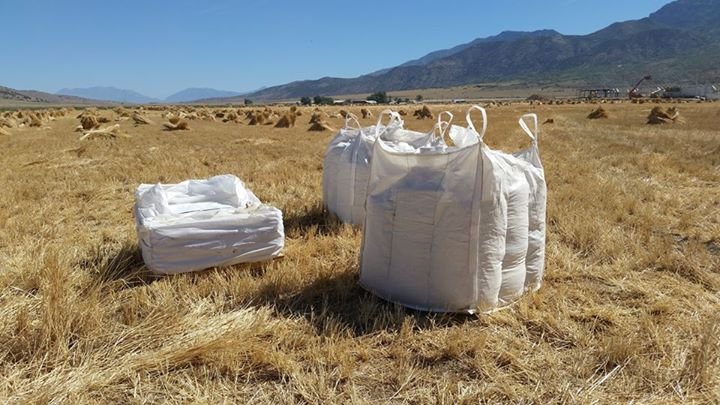 Einkorn Bags in Field