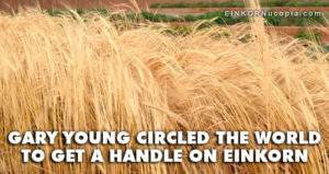 Einkorn Field at Young Living's Mona Farm